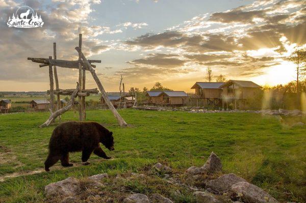 Lodge de la rivière de l'ours noir